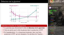 TS Spé - Contrôle de la régulation de la glycémie by La SVT au PIF